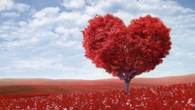 За любовта и обичта